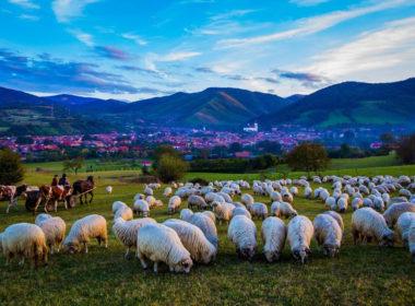 """""""Festivalul Brânzei și al Țuicii"""" în acest weekend la Rășinari"""